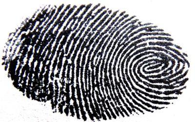 branch-spiral-pattern-line-finger-circle-1333689-pxhere.com